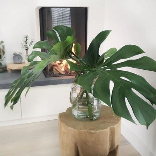 Planten zijn goed voor de energie in huis